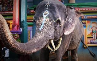 Sri Manakula Vinayagar Temple - Lakshmi