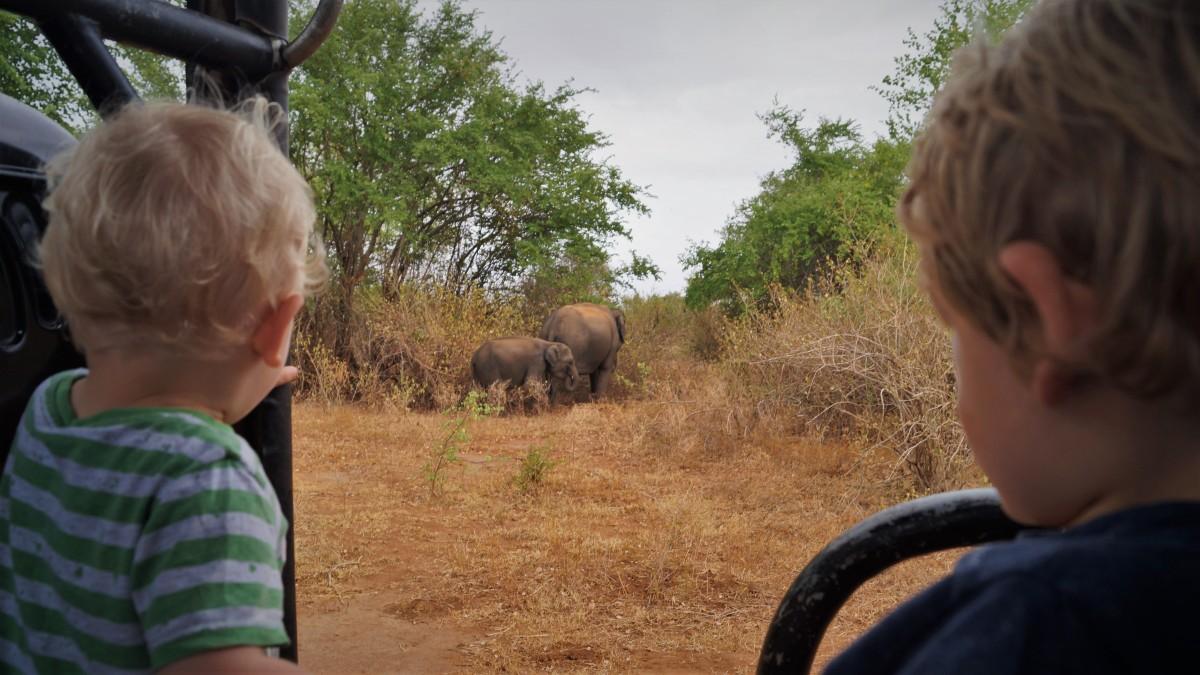 boys_watching_elephants