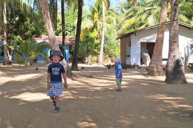 Arugam Bay with kids - Neighbouring chickens