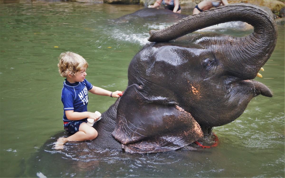 Washing_elephant